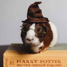 There's A Witch In The Family: I Made A Harry Potter-Themed Photo Shoot With My Guinea Pig