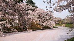 Hirosaki Travel: Hirosaki Castle