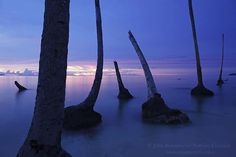 Photograph by @JohnStanmeyer  Ghost forest of coconut trees on the island of Pulau Balai, located off the west coast of Sumatra, Indonesia. The island dropped by 1.2 meters from the 8.7 magnitude earthquake, March 28, 2005, causing homes along the coast to drop into the sea. The quake also caused a several meter tsunami.