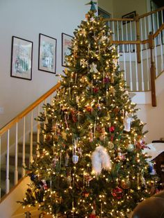 Blue Spruce Christmas Tree | Balsam Hill Fan Photo