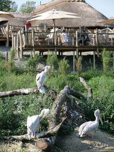 Zoom - zoo Erlebnis in Gelsenkirchen