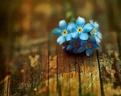 Blue flower Worn wood