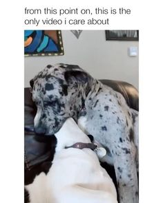 🎁🏆HOW TO GET A FREE GIFTS CARDS📲⤵️ #dog #funnyanimals #funnyanimalvideos #dogmemes #dogfunny #dogandpuppies #dogtraining #dogmom #dogtips #dogisgood #cutedogs #cutebabyanimals #cutepuppies #animalhumor #animalmemes #workingdogs #dogtrainingtips #catshumor #puppytraining ⬇️🎁DISCOVER HOW🎯🐶⬇️ Funny Animal Jokes, Funny Dog Memes, Funny Dog Videos, Funny Animal Pictures, Cute Funny Dogs, Cute Funny Animals, Cute Dogs And Puppies, Doggies, Cute Animal Videos