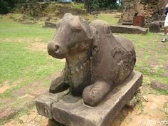 "Nandi, the sacred bull that carried the Hindu god Shiva, among the ruins of what is believed to be an ancient temple at an excavation site in Yogyakarta in Indonesia. The head of the excavation team from the Yogyakarta Antiquities and Relics Conservation Agency said, ""The statue is exquisite. The sculpture is carved differently from other statues of Nandi. This one is not depicted as fat"