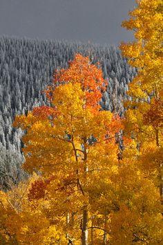 Fall at Ski Santa Fe