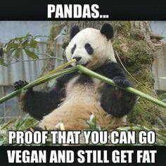 No fatshaming accepted / you are beautiful / vegan meme / vegan humor / veganism / vegan lifestyle / vegan for fat