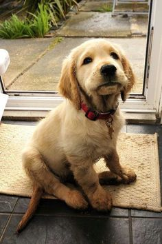 Hi find all solutions or clear your doubts about your loved one (pet) #vet online https://www.marshallspetzone.com/blog/vet-online-2/