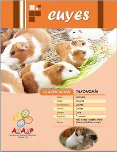 Asociación para el Desarrollo Agropecuario Emprende Perú (ADAEP)