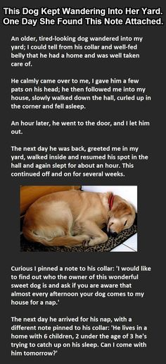 ...Woman Finds Note Around Dog's Neck. This Is Gold.