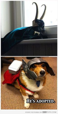 Cat and dog as Loki and Thor -