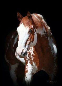 From I Love Horses