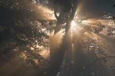 The Magic of Sunlight