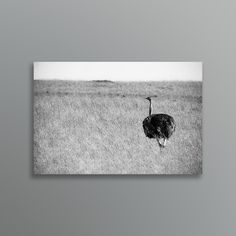 Black and white minimalistic photo of a free range Ostrich on the Masai Mara. Traditional Artwork, Free Range, Fine Art, Art Prints, Black And White, Digital, Creative, House, Animals