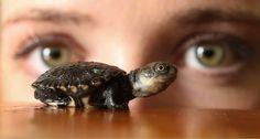 Cute Alert: Really, Really Tiny Tortoise - Cute - Stylist Magazine