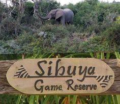 Port Alfred The Sibuya Game Reserve – wanaabeehere Pineapple Farm, Seaside Holidays, Old Pub, Port Elizabeth, Game Reserve, Seaside Towns, Places Of Interest, Sunshine Coast, East London