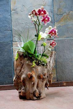 Gorgeous Orchid Arrangements Ideas To Enhanced Your Home Beauty 38