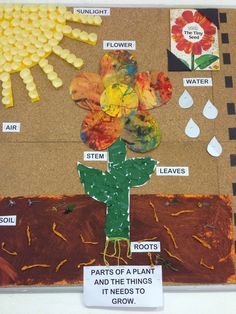 Parts of a plant. Based on the book: The Tiny Seed. Preschool Garden, Preschool Science, Preschool Activities, Classroom Themes, Classroom Activities, Book Activities, Kindergarten Classroom, Tiny Seed Activities, Spring Activities