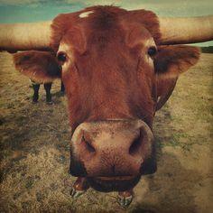 You want more?    Follow .......    Cowboy Ron @ Pinterest