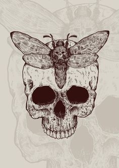 Skull YouTube channel: https://www.youtube.com/channel/UCZt7d-94gSUoU3h0TFsxvNg