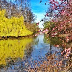 London, St. James Park by Igor Livant