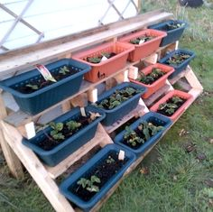 Stepped strawberry planter