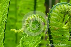 Picture of a green fern growing in the meadow