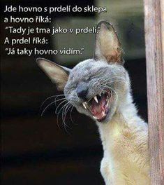 Funny animal jokes for kids I Love Cats, Cute Cats, Funny Cats, Funny Humor, Funny Stuff, Animals And Pets, Funny Animals, Cute Animals, Crazy Cat Lady