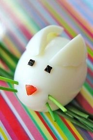 rabbit from egg