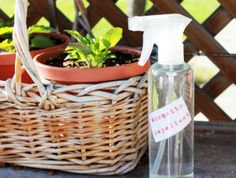 How to make a natural, non-gross-smelling mosquito repellent