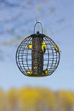 Globe Cage Feeder Gardener's Supply http://www.amazon.com/dp/B007XIW7N0/ref=cm_sw_r_pi_dp_wYlwwb0JW4QMG