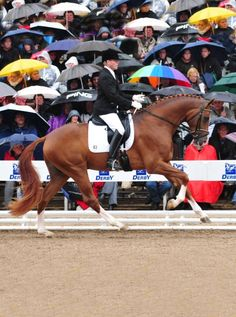 "thecityhorse: ""equine-world: "" Bvlgari 「Belissimo M x Wind of Change」 Rhinelander Stallion "" I really like this horse. """