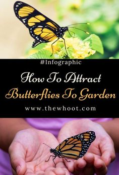 How To Make A Diy Butterfly Garden