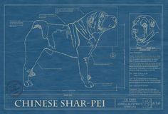 Chinese Shar-Pei Print // Animal Blueprint Company