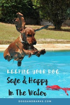 With summer fun all about the pool, the beach, and the water park, with your dog; now is an excellent time to revisit water safety rules.:
