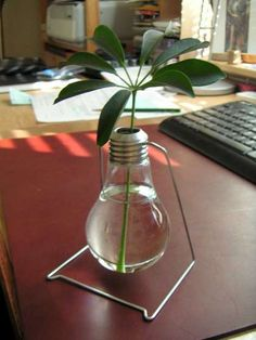 Lightbulbs: As Planters or Mini Terrariums Recycled Bag Dispenser 40 Pictures of Amazing Ideas to Reuse Forks 27 You Can Totally DIY This Gold-Dipped Light Bulb Chandelier via Brit + Co. Wonderful diy decorative ideas from old bulbs Recycled Light Bulbs, Light Bulb Crafts, Mini Terrarium, Diy Luz, Light Bulb Vase, Recyle, Hanging Vases, Old Lights, Ideias Diy