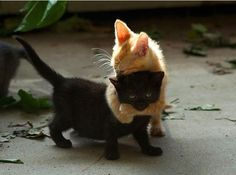 Best friends!!❤️❤️❤️
