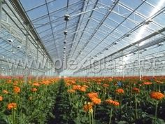 Winter is coming. Time for flowers! http://bit.ly/1jRisJ4  No, we don't mean hellebores and delosperma, we mean colorful cut flowers like gerbera and snapdragons, protected by PLEXIGLAS® Alltop and PLEXIGLAS® Resist acrylic sheets.