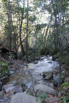 Uvas Canyon State Park. CA.