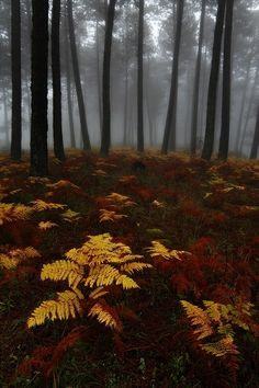 Mystical Forest, Spain