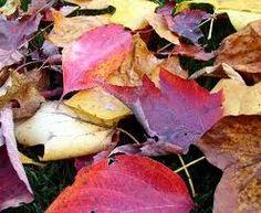 leaves in soil - Αναζήτηση Google