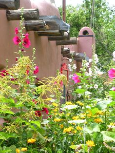 Beautiful hollyhock gardens common in Taos, NM