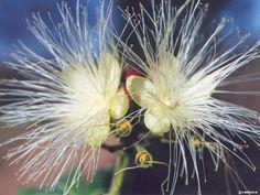 Különleges virág. Dandelion, Flowers, Plants, Dandelions, Florals, Planters, Flower, Blossoms, Plant