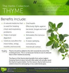 thyme benefits - Google Search