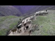 Perdón de hijo - Pelicula Completa - YouTube