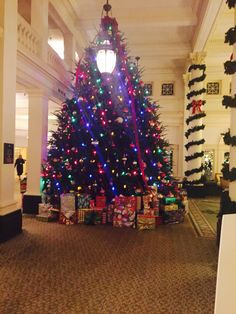 Great Hall's tree - view from The Shoppes