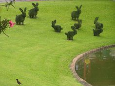 Rabbit Topiary in grounds of Palace near Bangkok, Thailand.