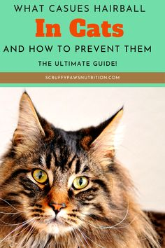 Why does a cat get hairballs? Read the tips to prevent and treat cat hairballs. Help your kitties avoid hairballs with diet, supplements, and proper grooming, etc. Check this out. Cat Care Tips, Pet Care, Cat Health, Health Tips, Baby Cats, Cats And Kittens, Cool Cat Toys, Cat Diet, Cat Nutrition