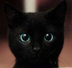 じっと見つめる可愛すぎな黒猫。