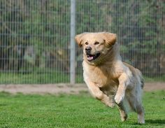 Try These Tips To Train Your Dog >>> You can get more details by clicking on the image.