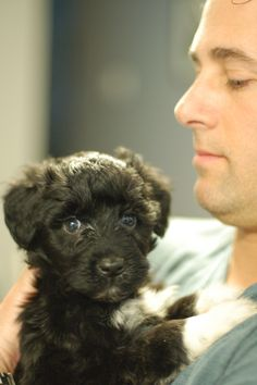 Puppy love. Our Portuguese Water Dog at 6 weeks.